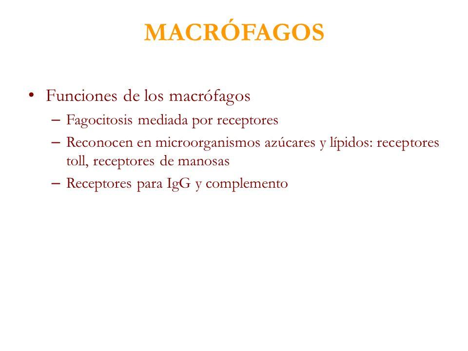 MACRÓFAGOS Funciones de los macrófagos