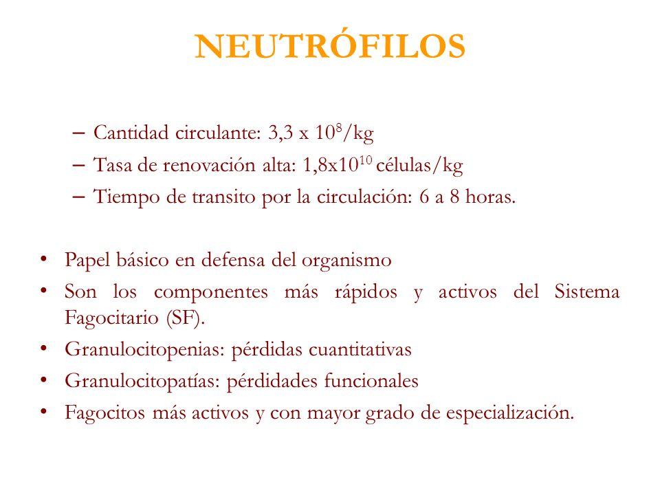 NEUTRÓFILOS Cantidad circulante: 3,3 x 108/kg