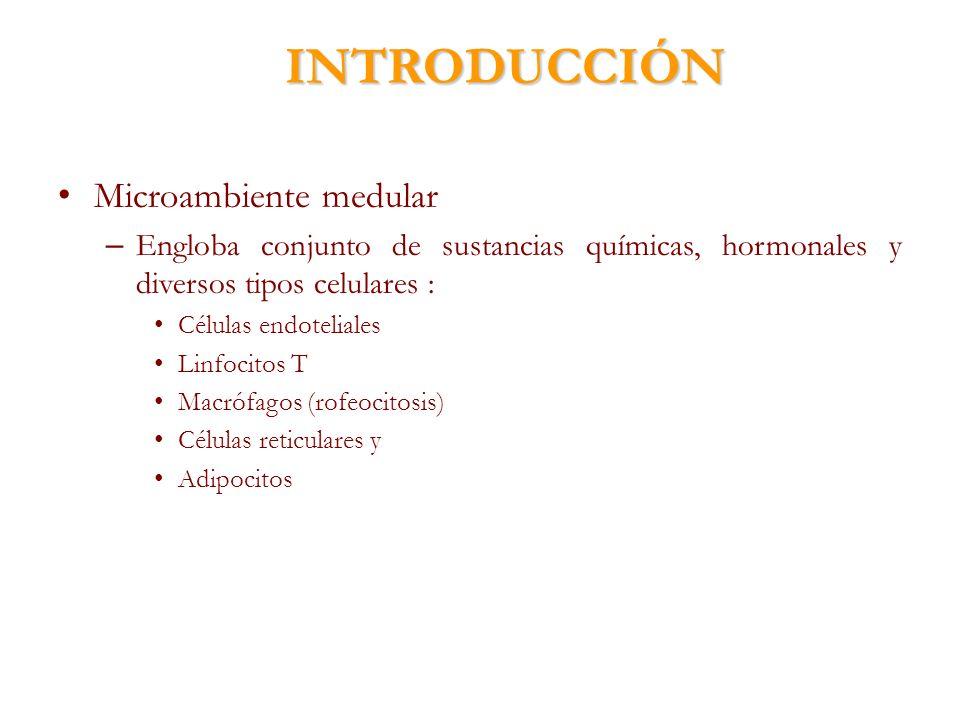 INTRODUCCIÓN Microambiente medular
