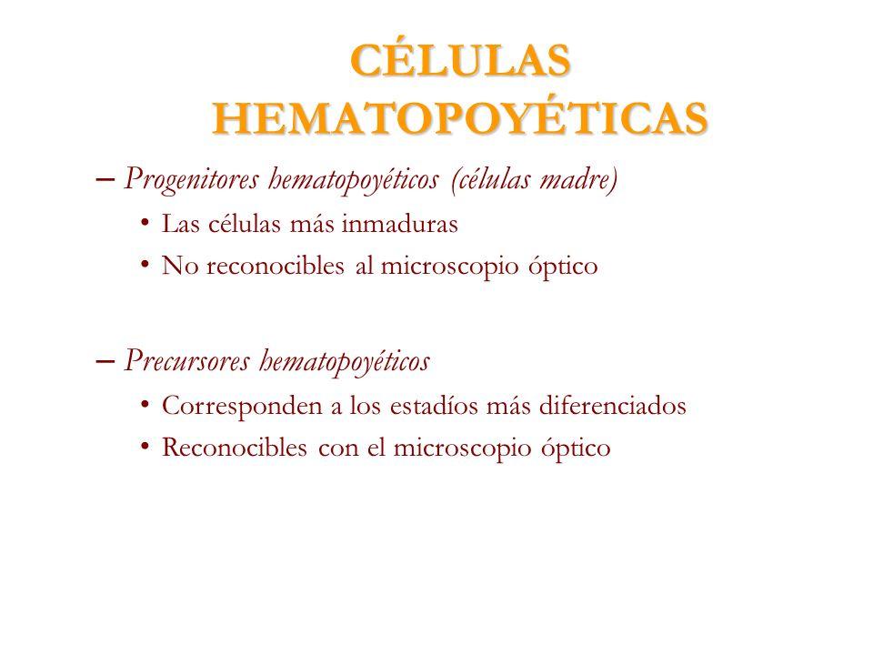 CÉLULAS HEMATOPOYÉTICAS