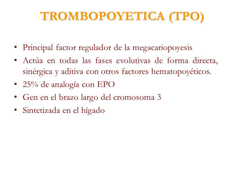 TROMBOPOYETICA (TPO) Principal factor regulador de la megacariopoyesis
