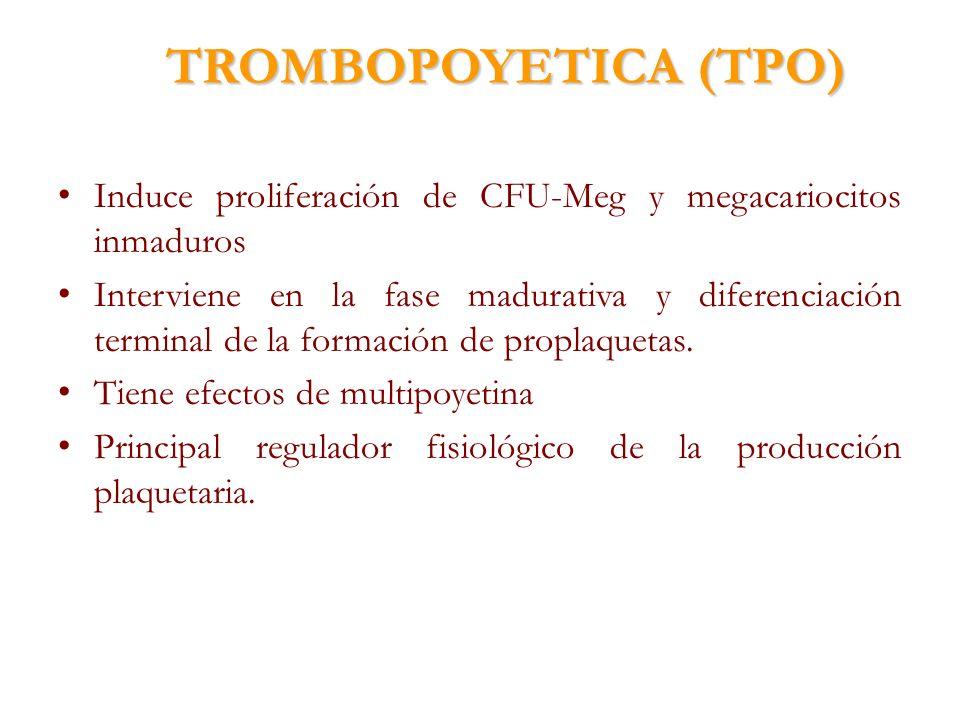 TROMBOPOYETICA (TPO)Induce proliferación de CFU-Meg y megacariocitos inmaduros.