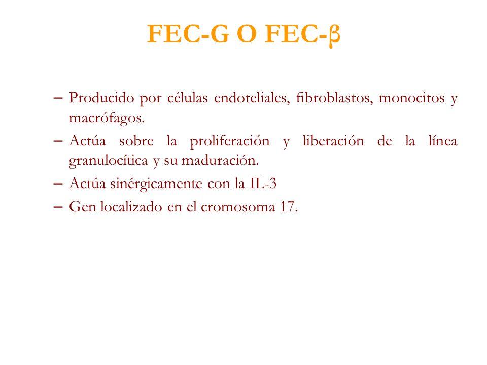 FEC-G O FEC-β Producido por células endoteliales, fibroblastos, monocitos y macrófagos.