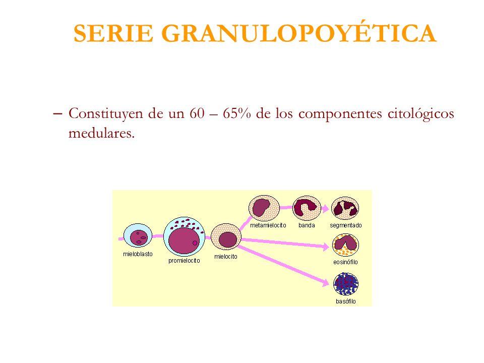 SERIE GRANULOPOYÉTICA