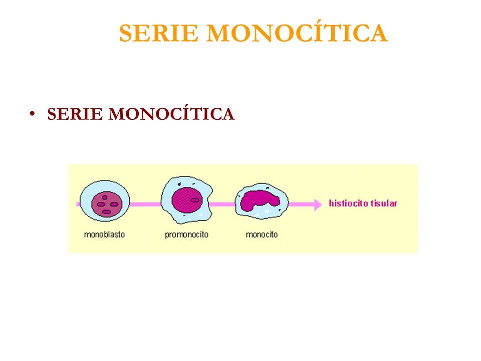 SERIE MONOCÍTICA SERIE MONOCÍTICA