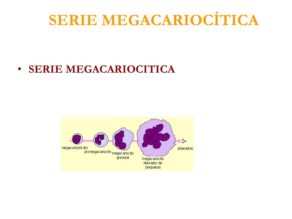SERIE MEGACARIOCÍTICA