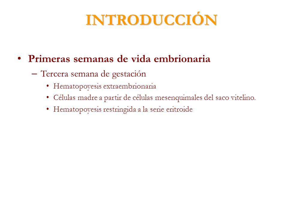 INTRODUCCIÓN Primeras semanas de vida embrionaria