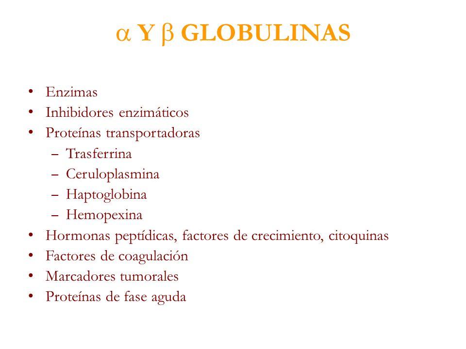  Y  GLOBULINAS Enzimas Inhibidores enzimáticos