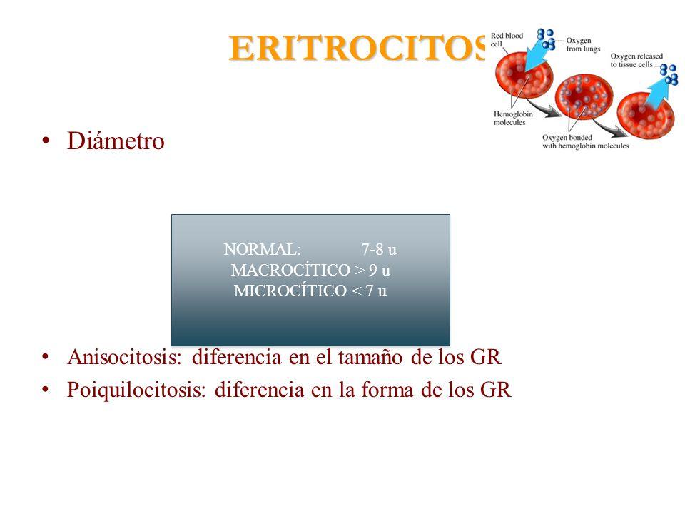 ERITROCITOS Diámetro Anisocitosis: diferencia en el tamaño de los GR
