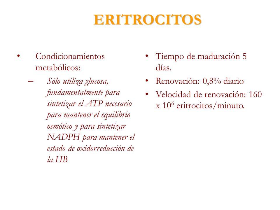 ERITROCITOS Condicionamientos metabólicos: