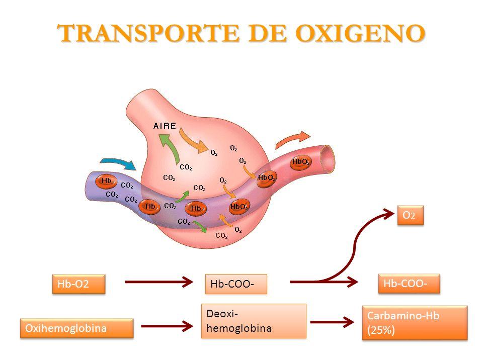 TRANSPORTE DE OXIGENO O2 Hb-O2 Hb-COO- Deoxi-hemoglobina