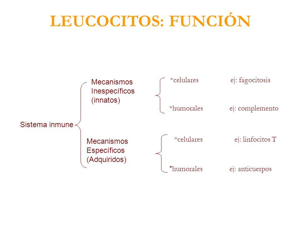 LEUCOCITOS: FUNCIÓN *celulares ej: fagocitosis Mecanismos