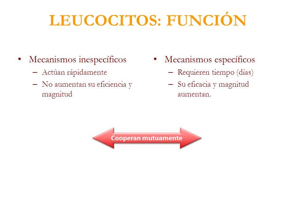 LEUCOCITOS: FUNCIÓN Mecanismos inespecíficos Mecanismos específicos