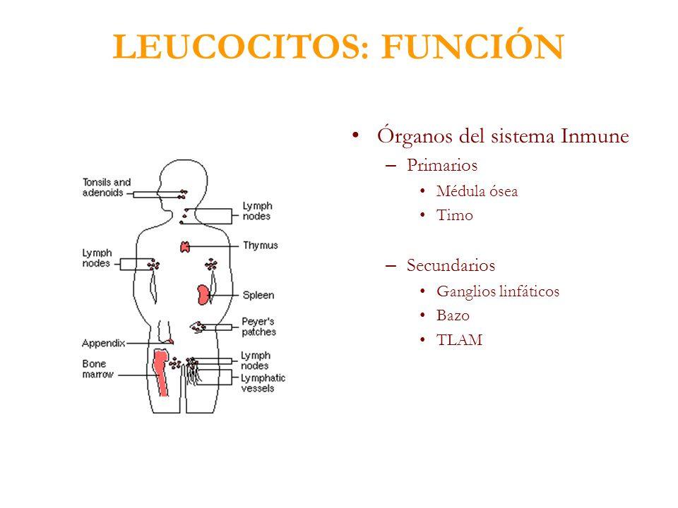 LEUCOCITOS: FUNCIÓN Órganos del sistema Inmune Primarios Secundarios