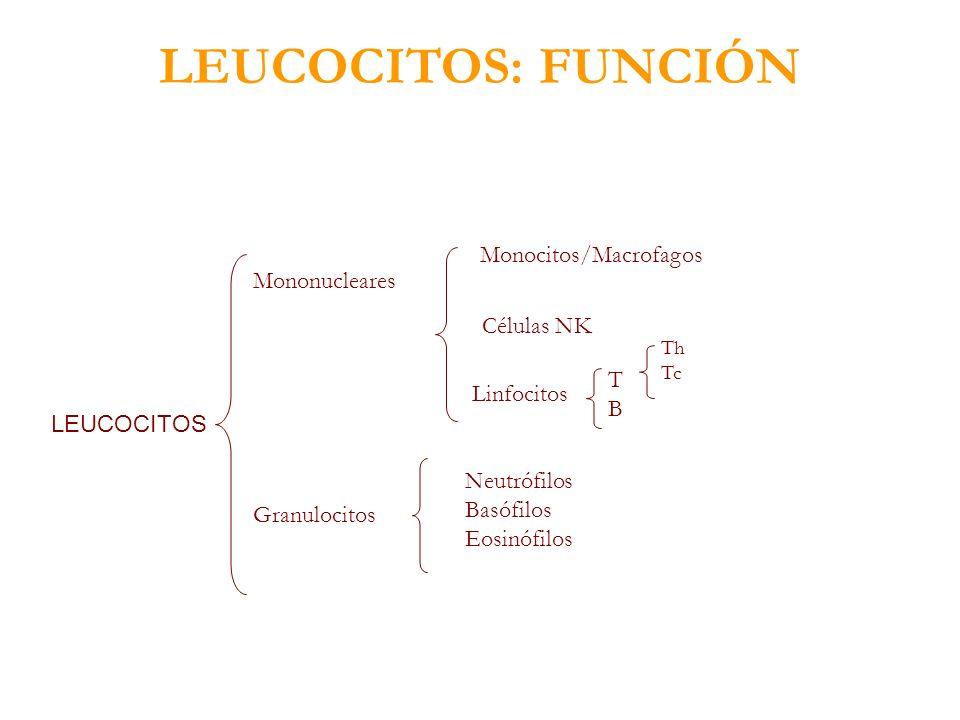 LEUCOCITOS: FUNCIÓN Monocitos/Macrofagos Mononucleares Células NK T