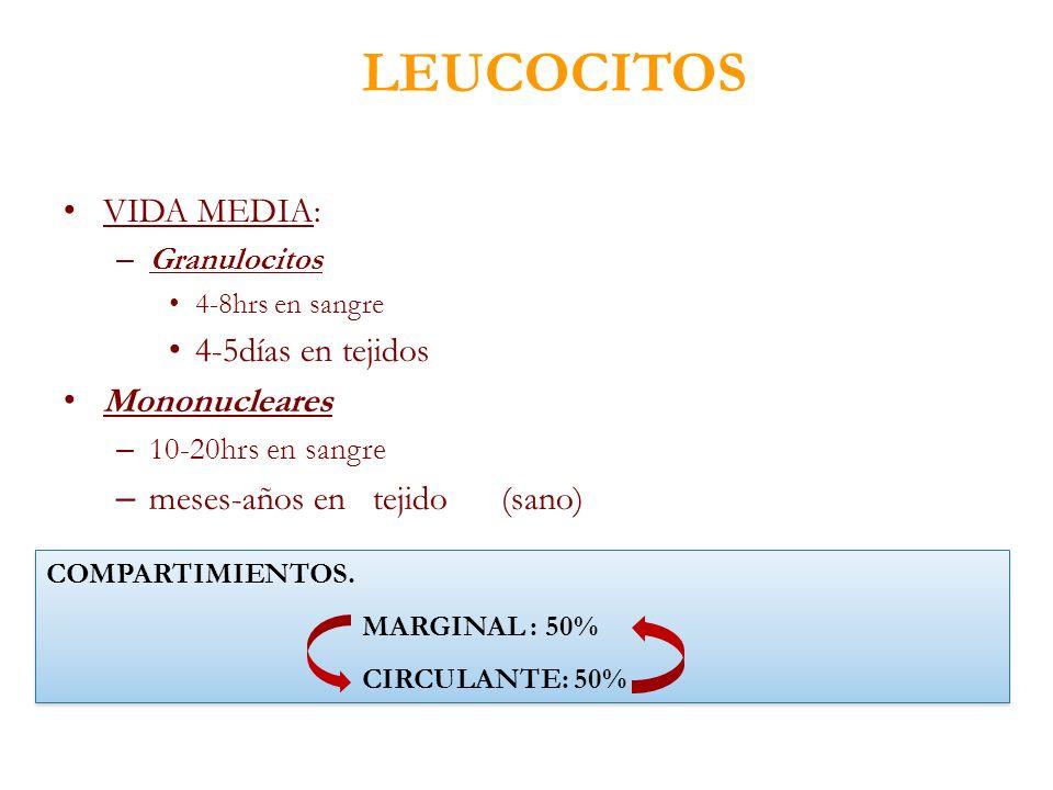 LEUCOCITOS VIDA MEDIA: 4-5días en tejidos Mononucleares