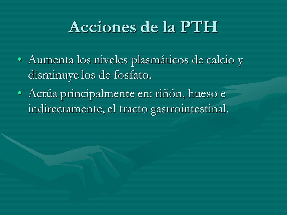 Acciones de la PTH Aumenta los niveles plasmáticos de calcio y disminuye los de fosfato.