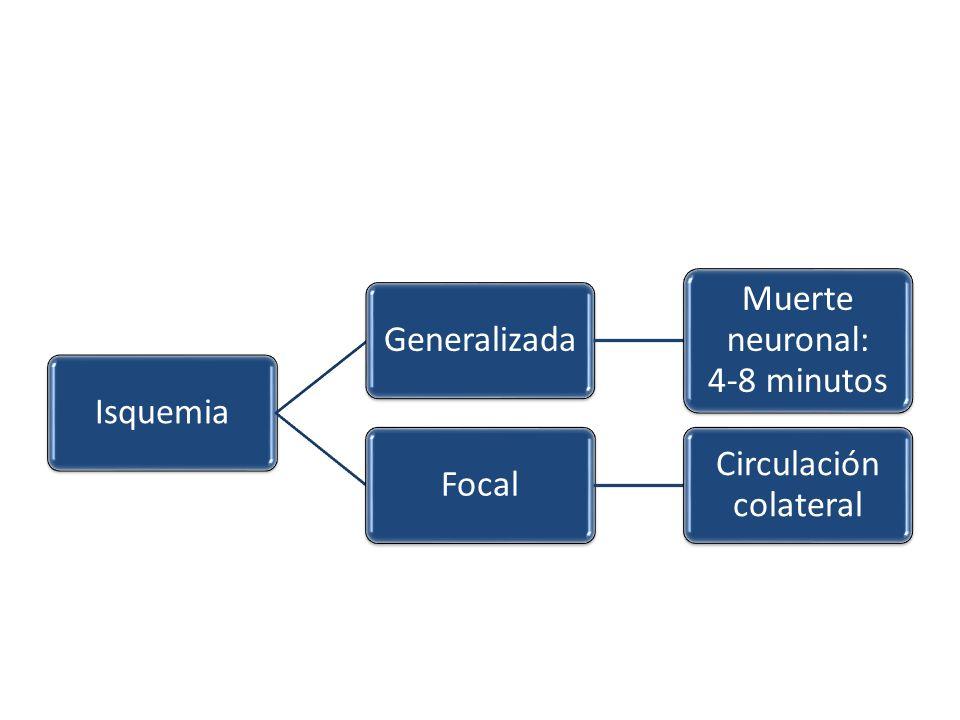 Muerte neuronal: 4-8 minutos Focal Circulación colateral