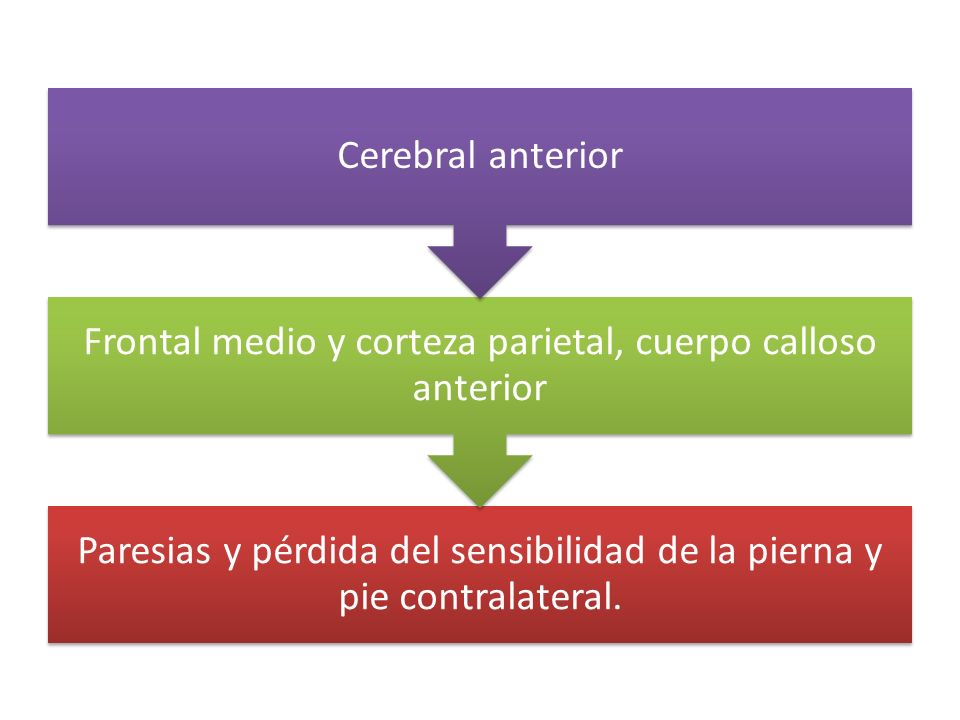 Frontal medio y corteza parietal, cuerpo calloso anterior