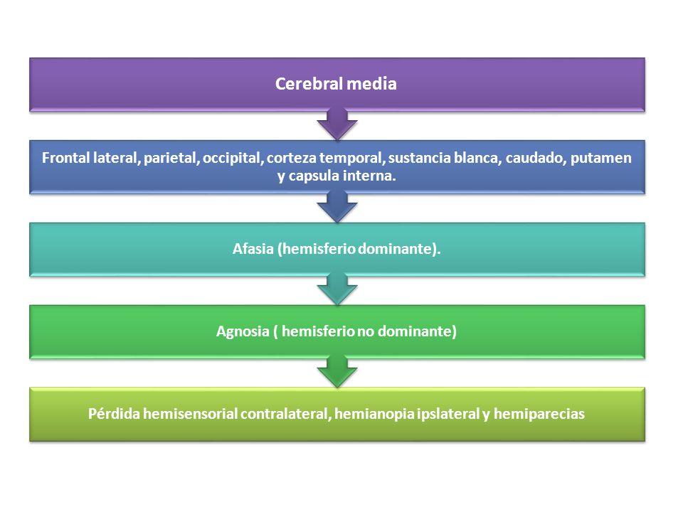 Afasia (hemisferio dominante). Agnosia ( hemisferio no dominante)