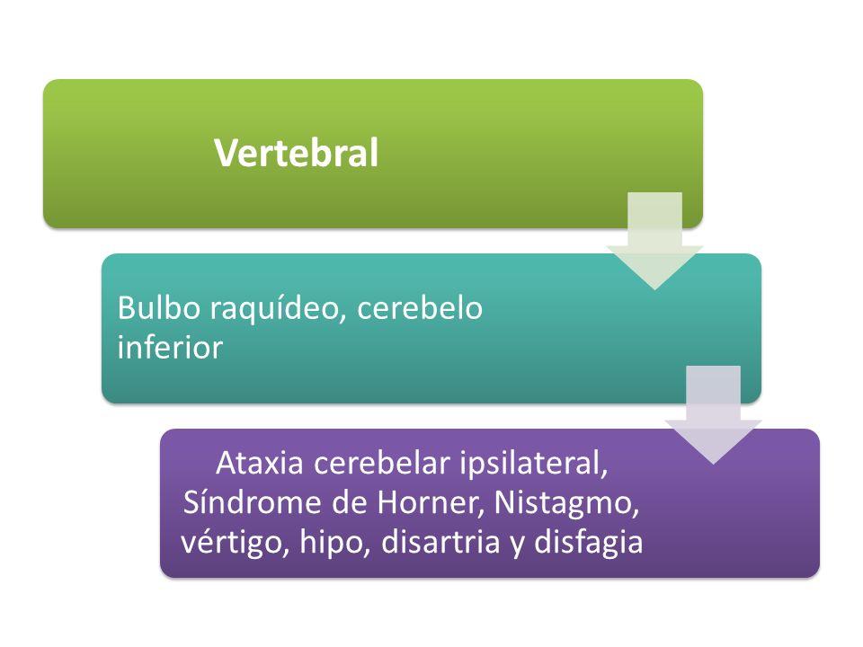 Vertebral Bulbo raquídeo, cerebelo inferior