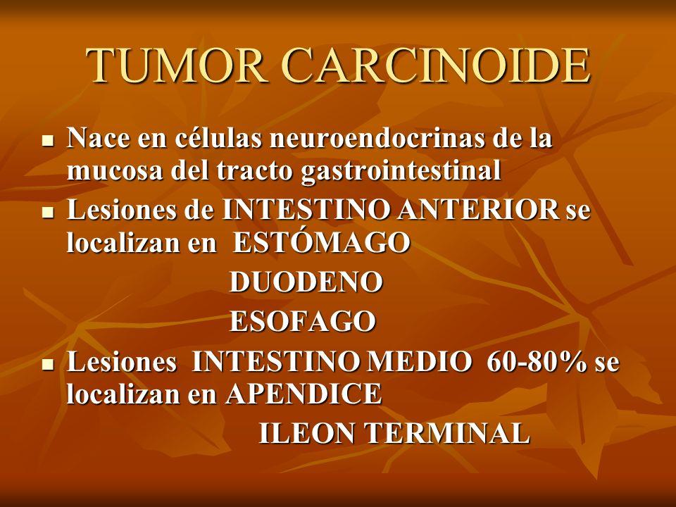 TUMOR CARCINOIDE Nace en células neuroendocrinas de la mucosa del tracto gastrointestinal. Lesiones de INTESTINO ANTERIOR se localizan en ESTÓMAGO.