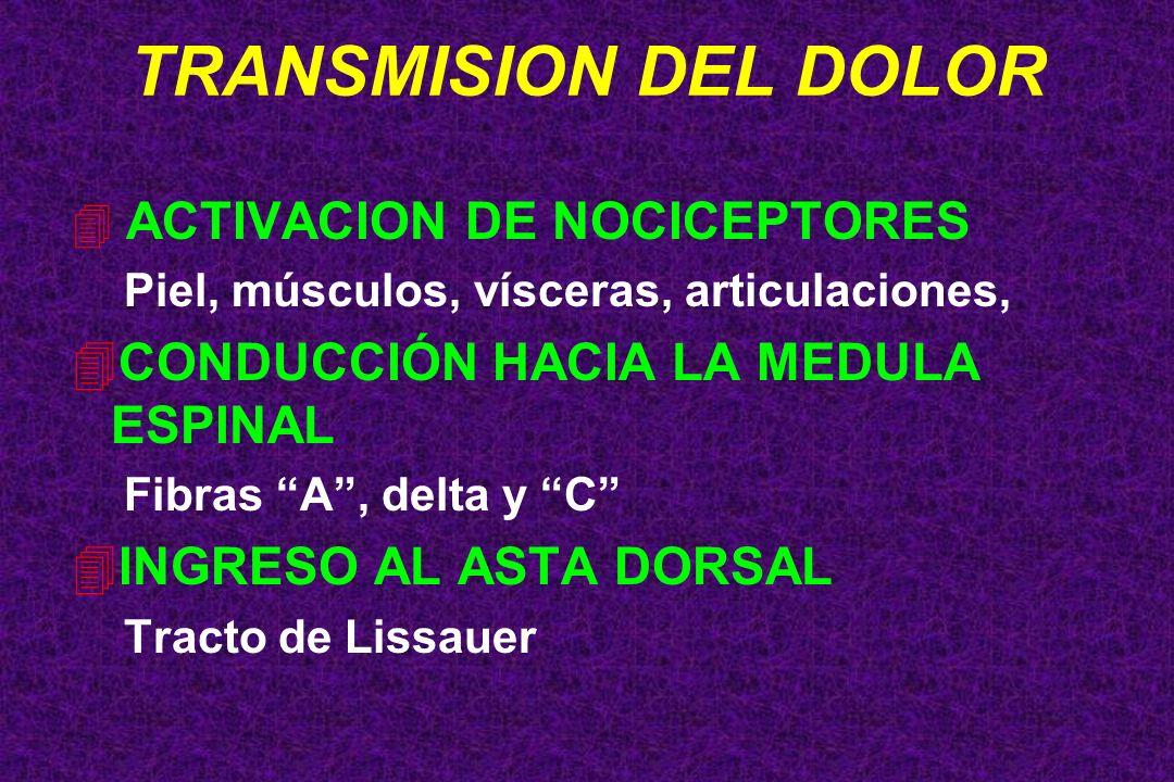 TRANSMISION DEL DOLOR CONDUCCIÓN HACIA LA MEDULA ESPINAL