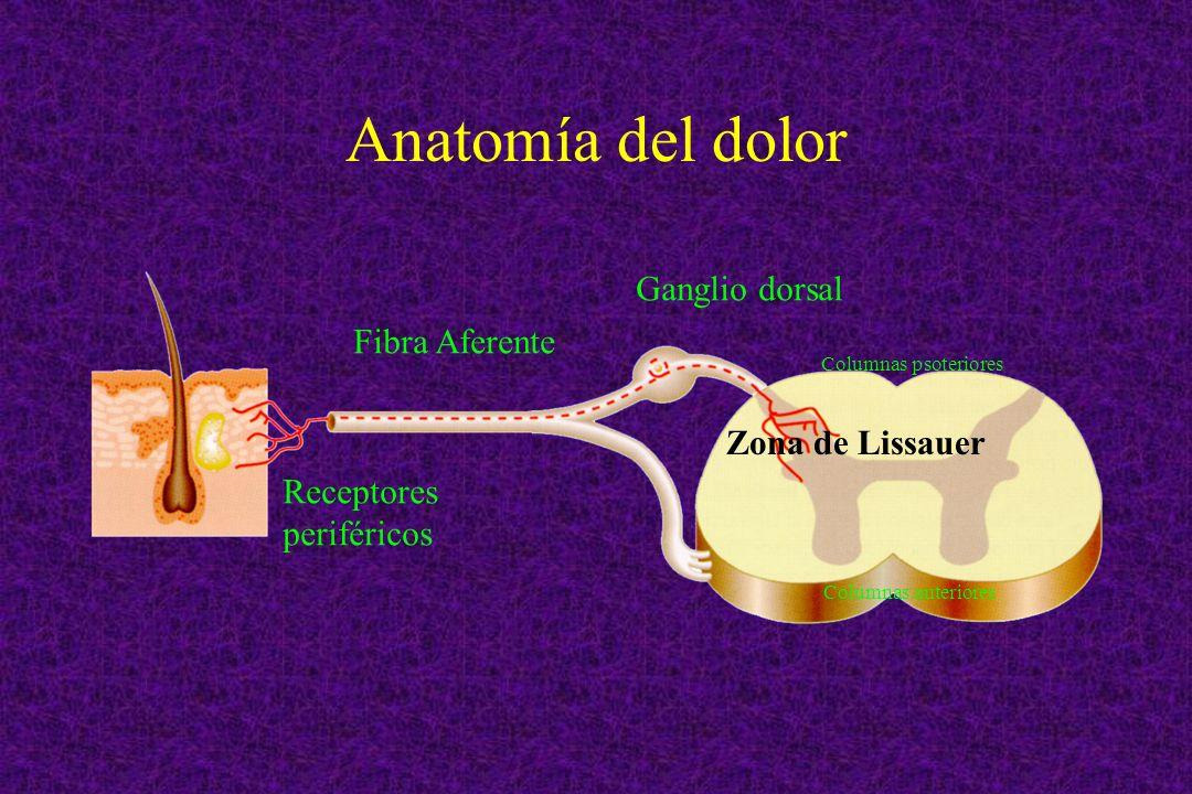 Anatomía del dolor Ganglio dorsal Fibra Aferente Zona de Lissauer