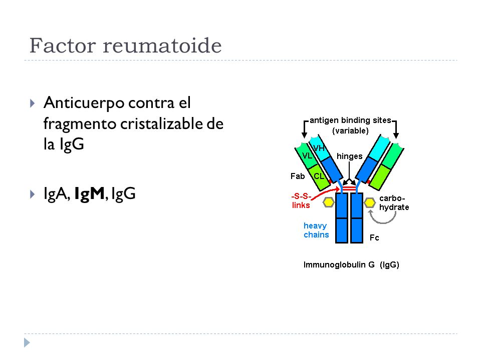 Factor reumatoide Anticuerpo contra el fragmento cristalizable de la IgG IgA, IgM, IgG