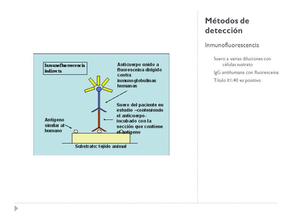 Métodos de detección Inmunofluorescencia