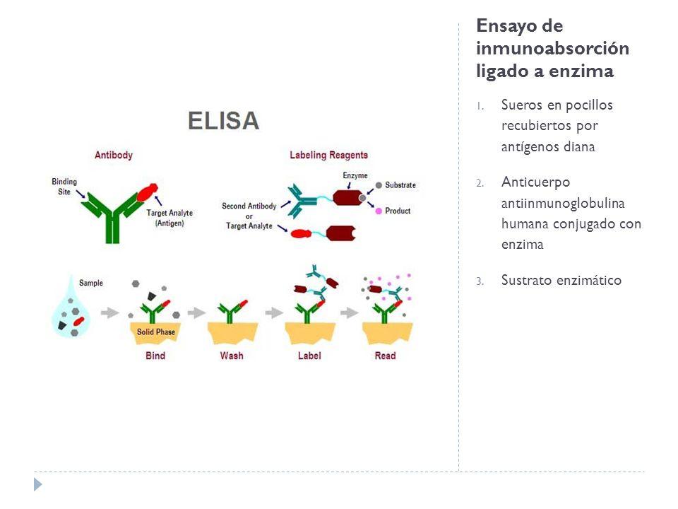 Ensayo de inmunoabsorción ligado a enzima