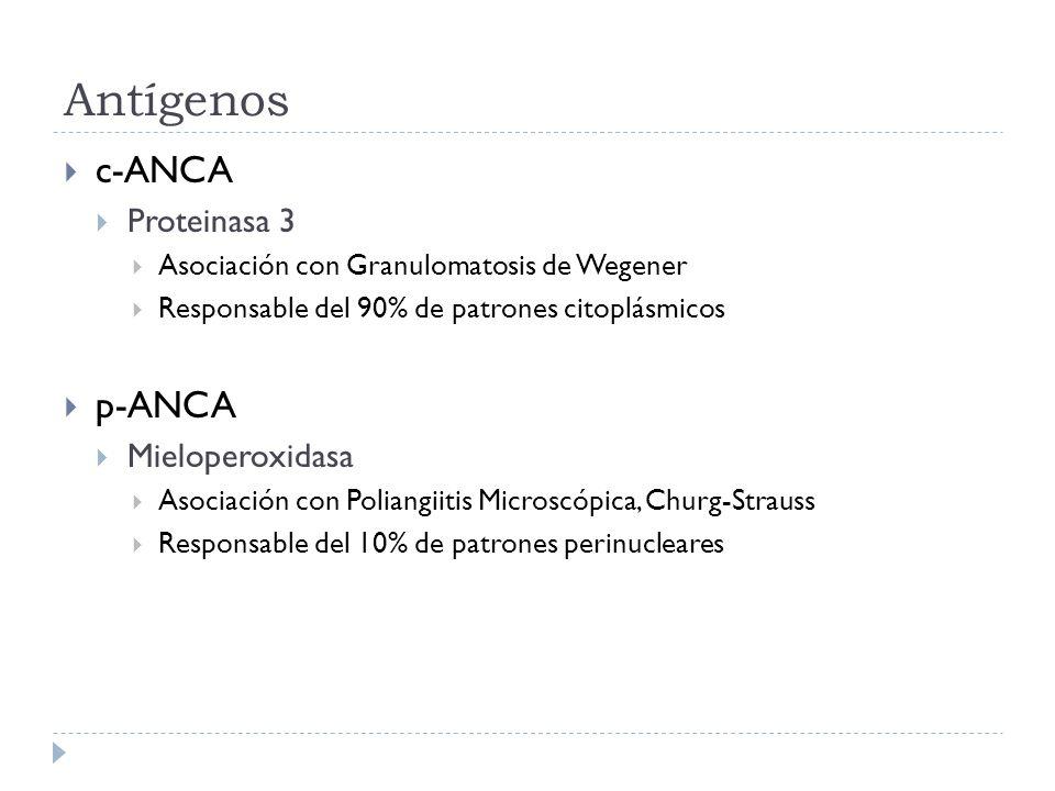 Antígenos c-ANCA p-ANCA Proteinasa 3 Mieloperoxidasa