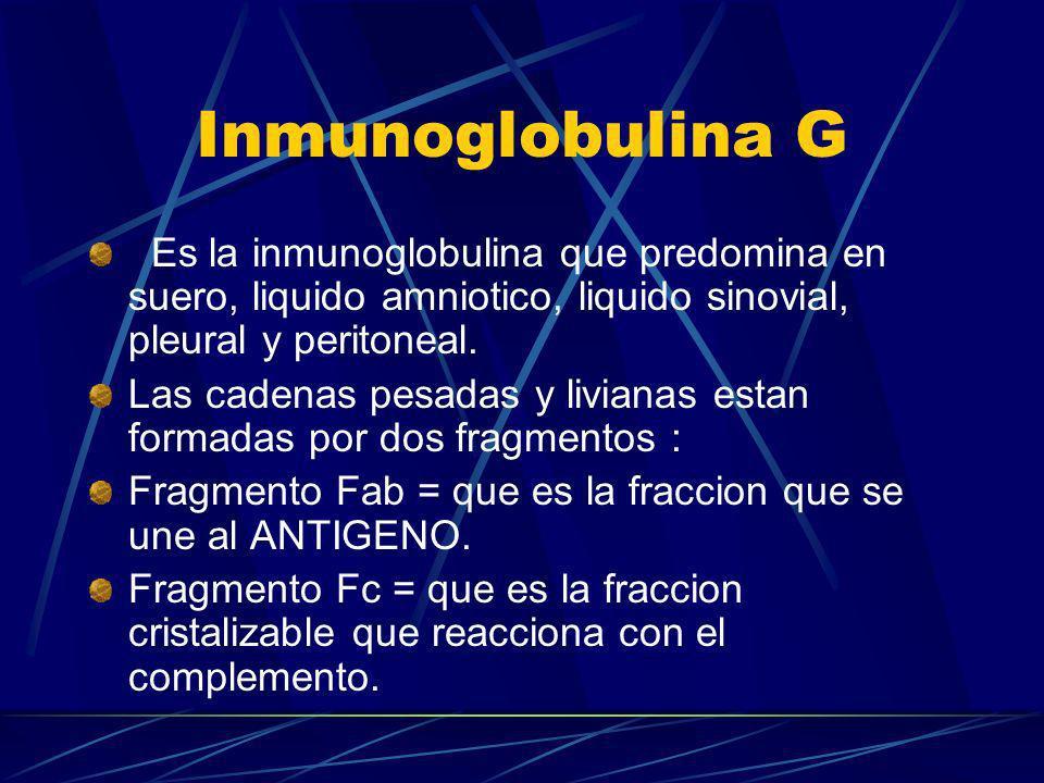 Inmunoglobulina G Es la inmunoglobulina que predomina en suero, liquido amniotico, liquido sinovial, pleural y peritoneal.