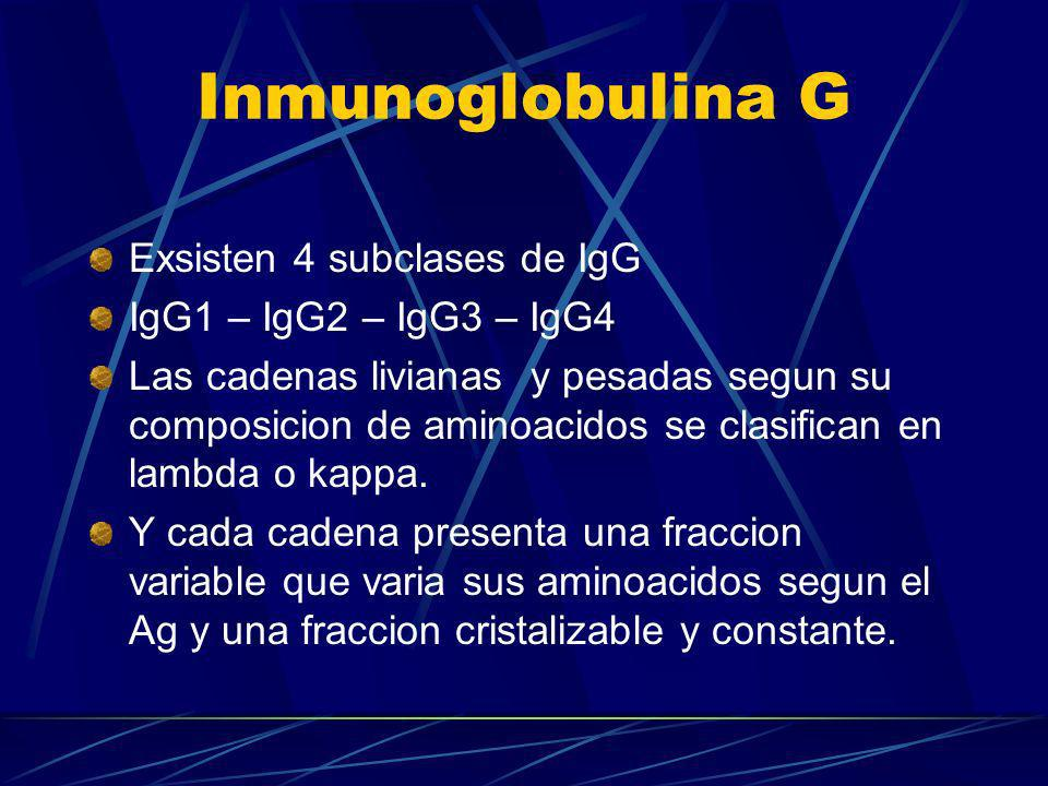 Inmunoglobulina G Exsisten 4 subclases de IgG