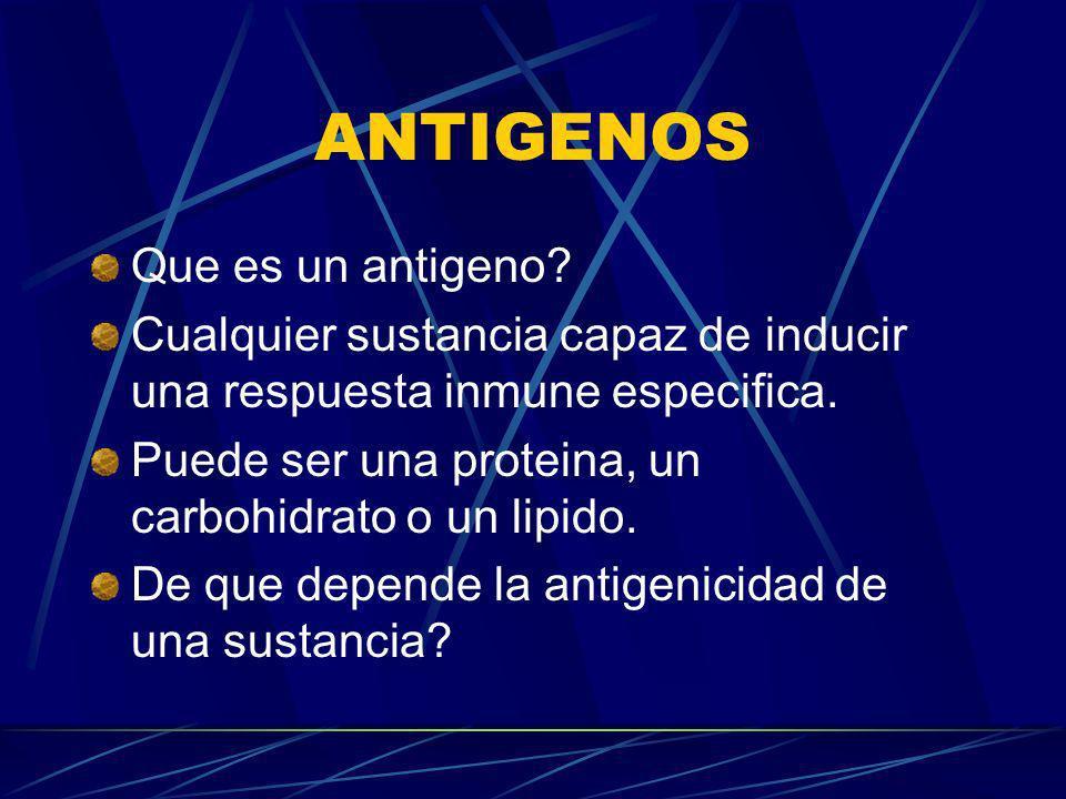 ANTIGENOS Que es un antigeno