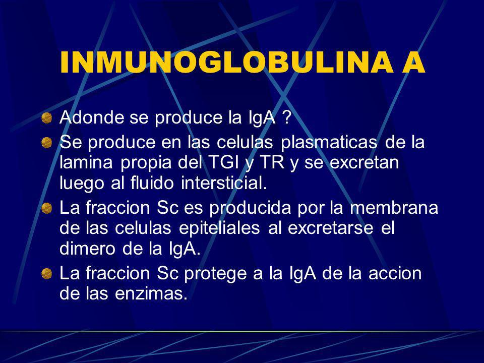 INMUNOGLOBULINA A Adonde se produce la IgA