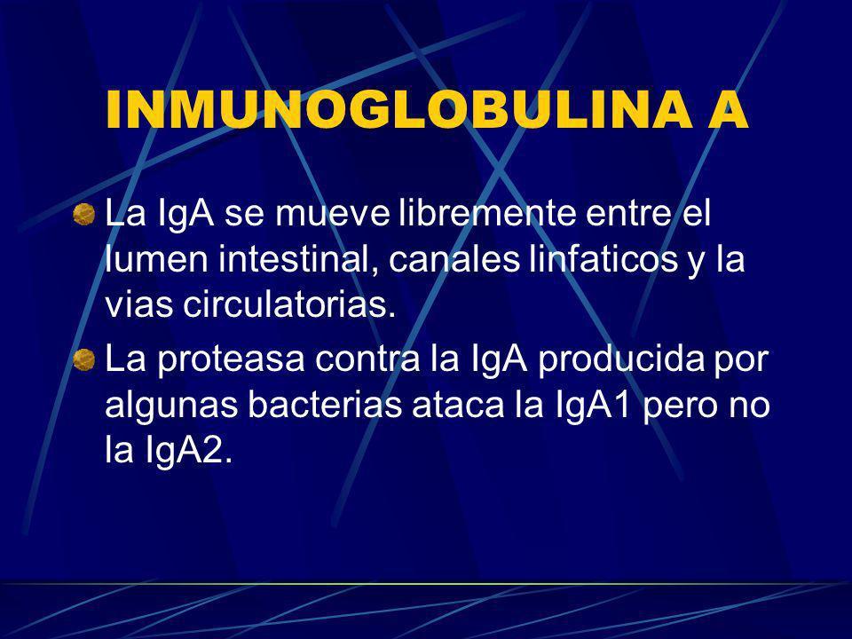 INMUNOGLOBULINA A La IgA se mueve libremente entre el lumen intestinal, canales linfaticos y la vias circulatorias.