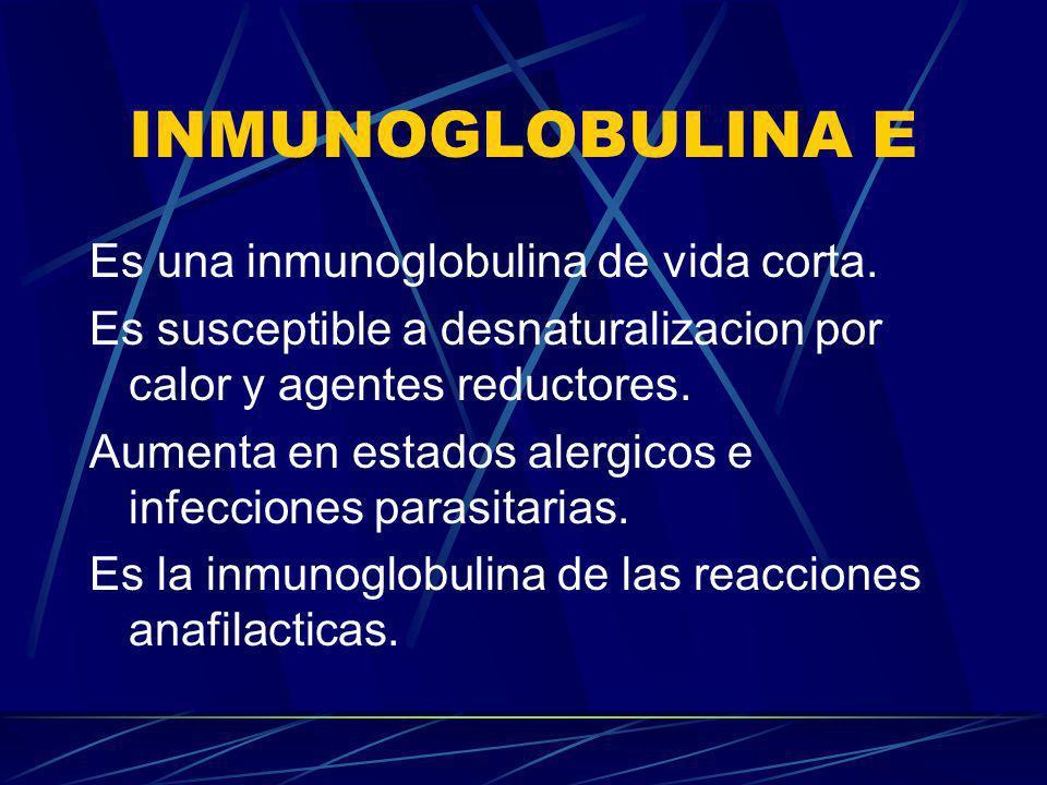 INMUNOGLOBULINA E Es una inmunoglobulina de vida corta.