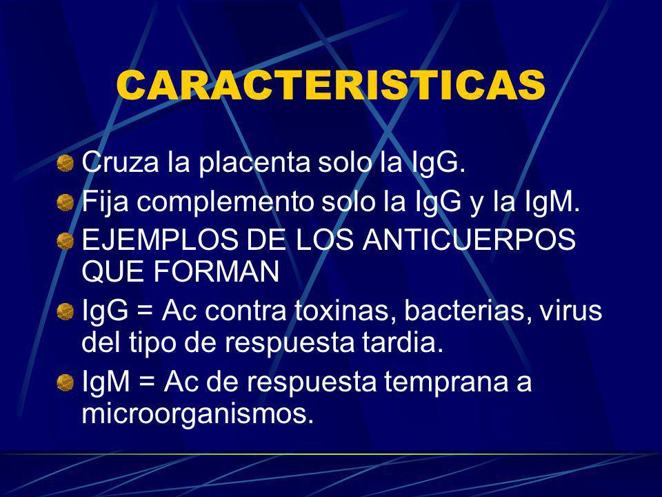 CARACTERISTICAS Cruza la placenta solo la IgG.