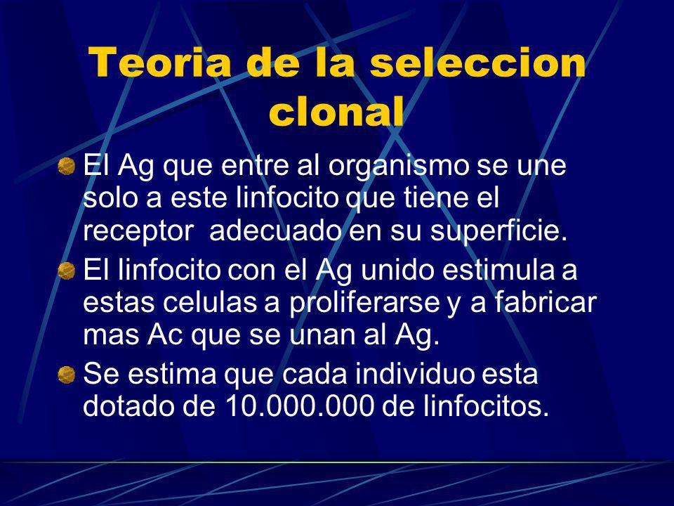 Teoria de la seleccion clonal