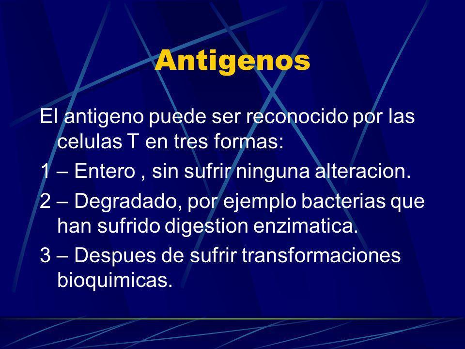 Antigenos El antigeno puede ser reconocido por las celulas T en tres formas: 1 – Entero , sin sufrir ninguna alteracion.