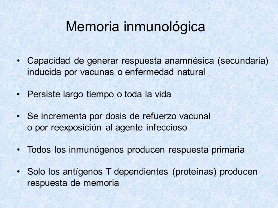 Memoria inmunológica Capacidad de generar respuesta anamnésica (secundaria) inducida por vacunas o enfermedad natural.