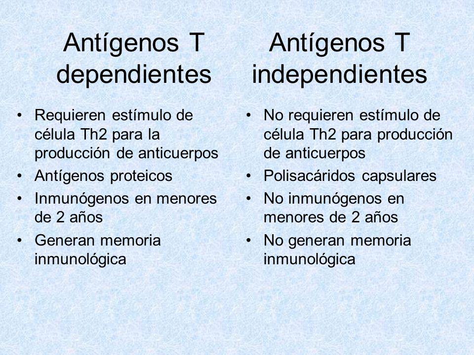 Antígenos T dependientes