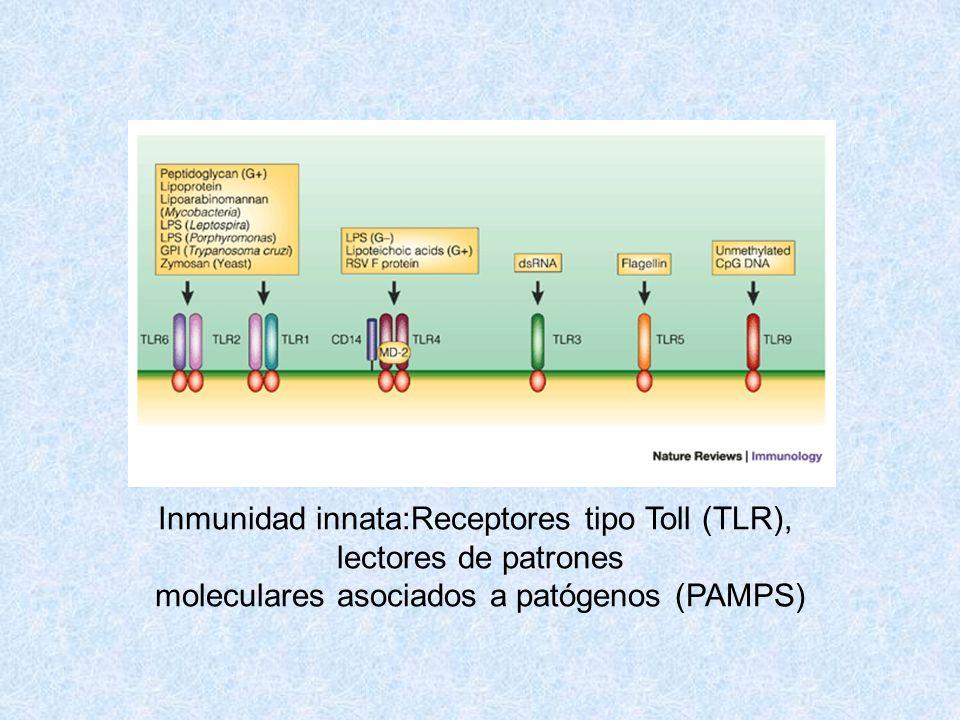 Inmunidad innata:Receptores tipo Toll (TLR), lectores de patrones