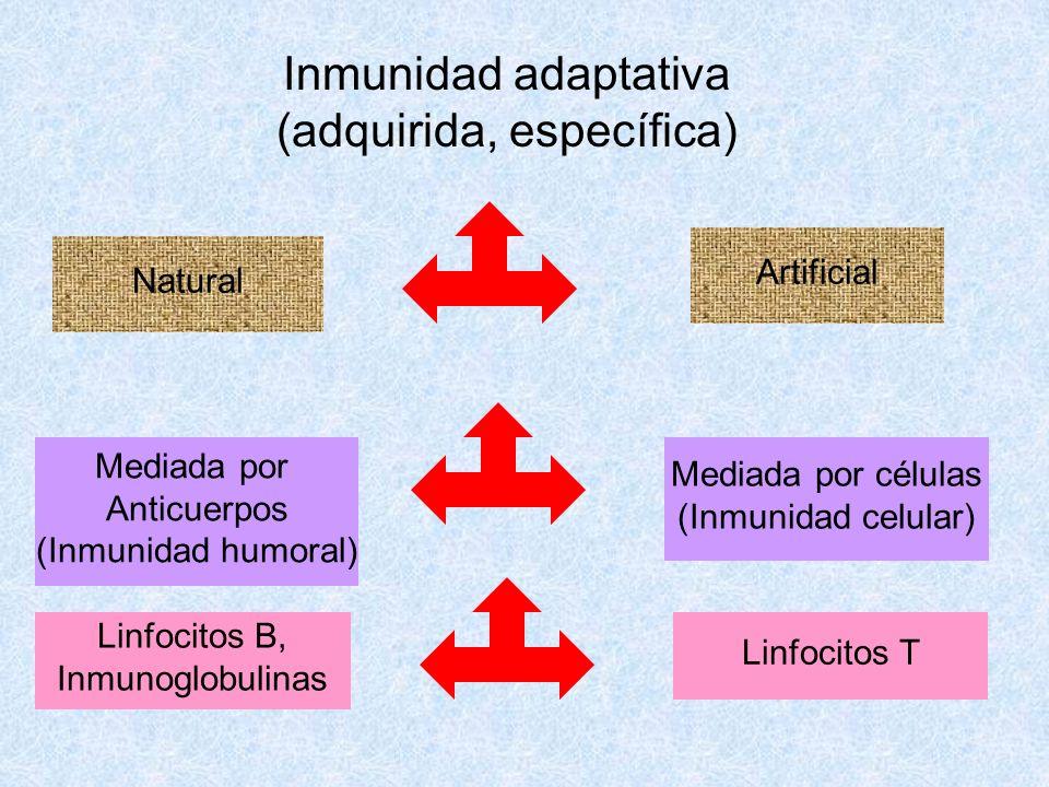 Inmunidad adaptativa (adquirida, específica)