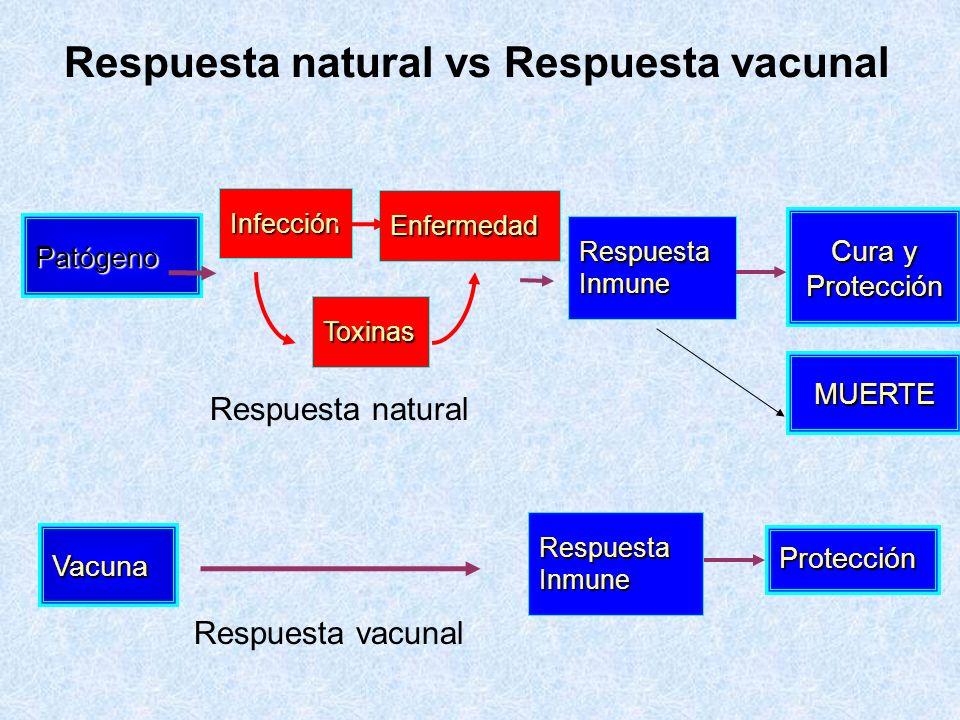 Respuesta natural vs Respuesta vacunal