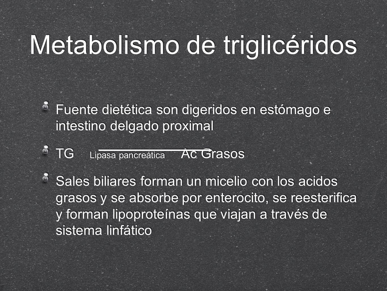 Metabolismo de triglicéridos
