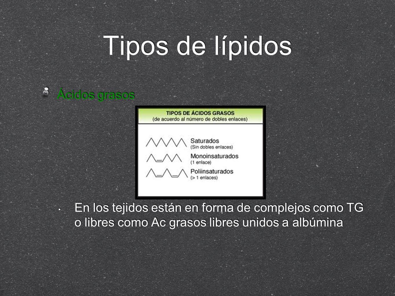 Tipos de lípidos Ácidos grasos