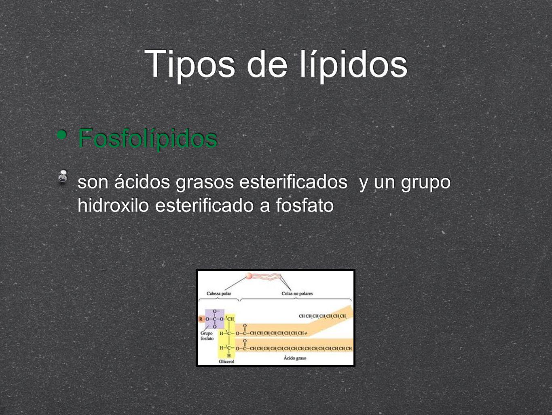 Tipos de lípidos Fosfolípidos