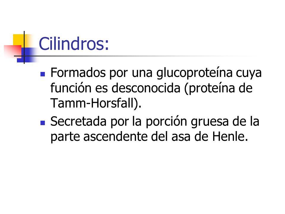 Cilindros: Formados por una glucoproteína cuya función es desconocida (proteína de Tamm-Horsfall).